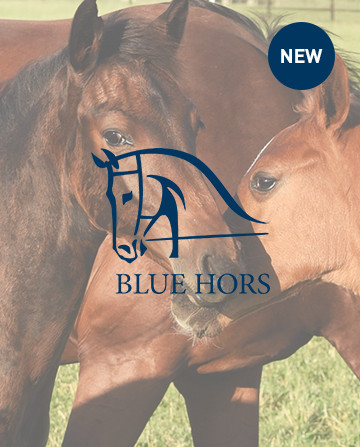 Horse Equipment Horse Rugs And Equestrian Clothing Horze Uk